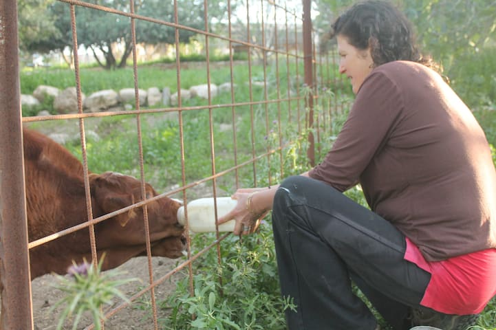 in the farm