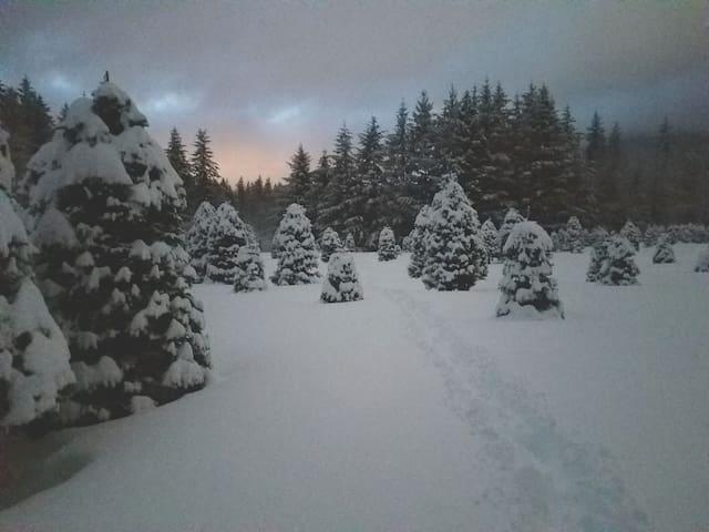 Snow at the Christmas tree farm