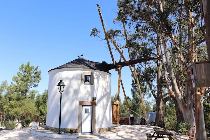 Amélia's Windmill