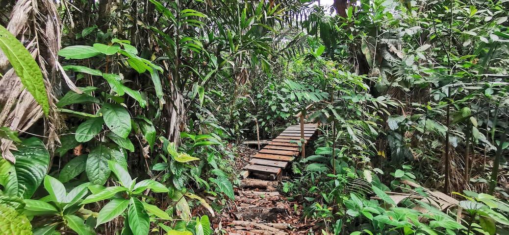 Zona para camping en bosque #urambacanisimo.