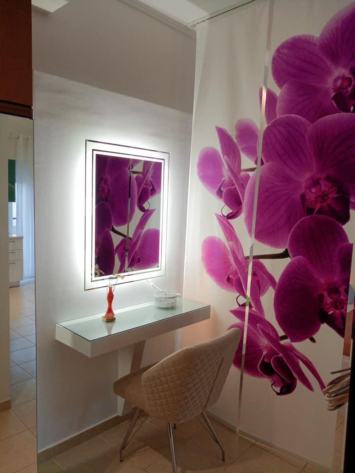 Orchid Studio 1