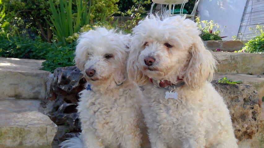 Kika et Lili vous recommandent