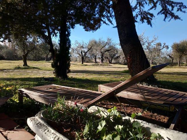 One acre of garden to explore