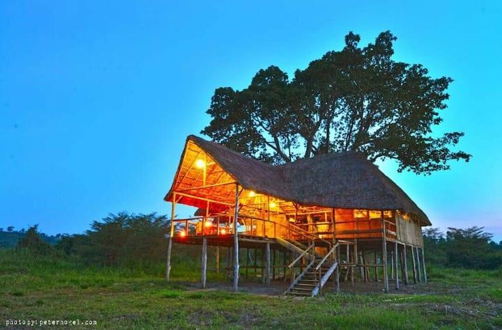 Climbing Lion Tree House Ishasha