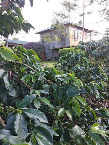 PELANGI Guest House ( PELANGI Coffee VILLA'S)