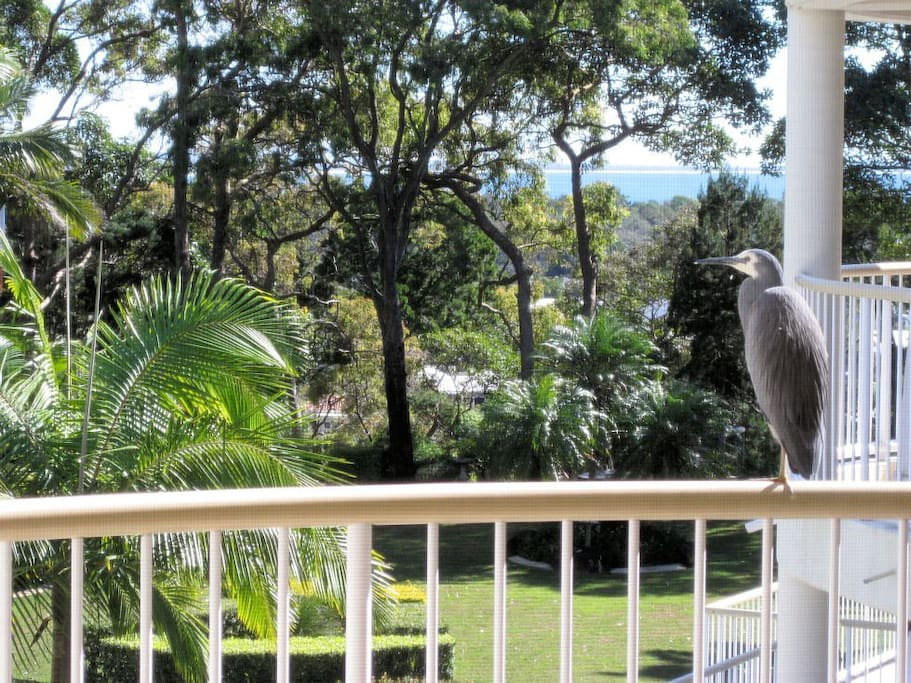 Leafy views of the Noosa sound and Laguna bay... apparently, we're not the only ones who enjoy this view so much!