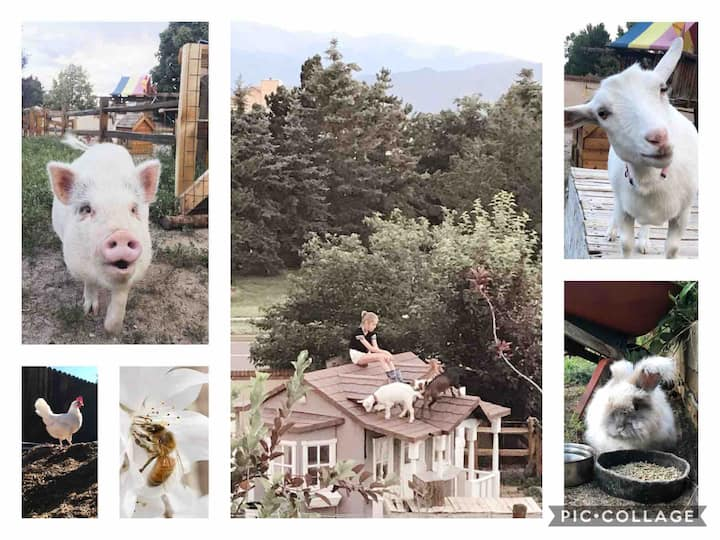 Briar Patch Homestead,  Bright & Sunny Urban Farm