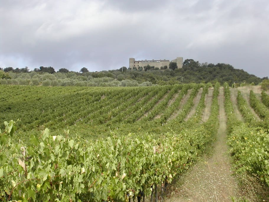 View of the castle from the Vineyard