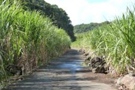 La Petite Roulotte dans la Bananeraie