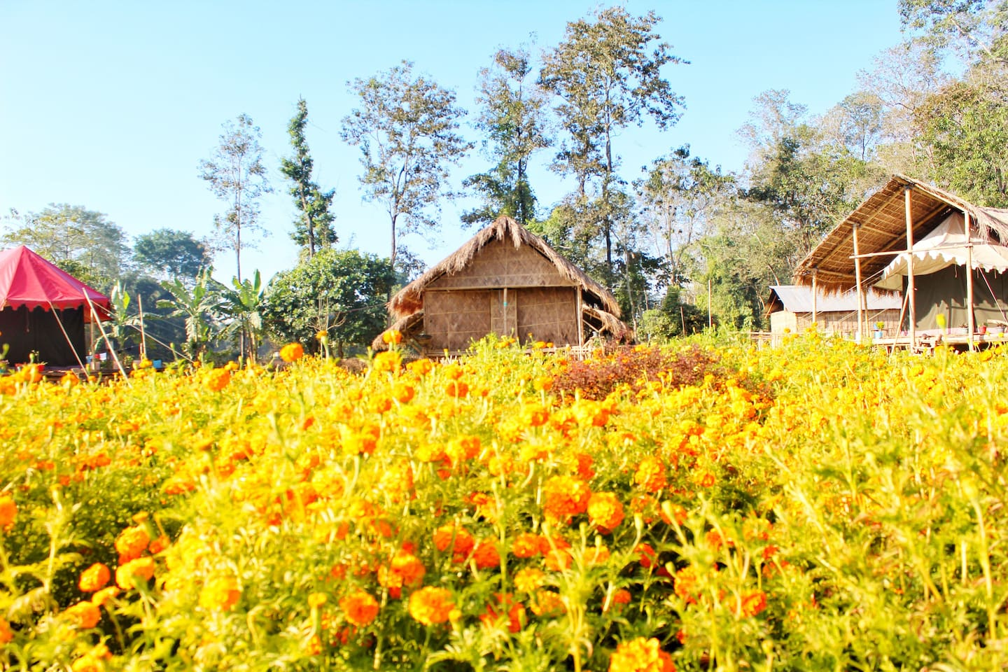 Bamboo and  swiss cottages with the merrygold garden