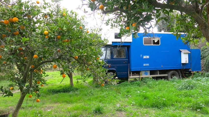 HOME TRUCK - short walk to town in countryside - Órgiva - Camper/RV
