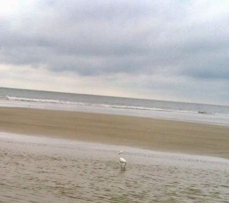 You will find miles of beach at Beautiful HHI