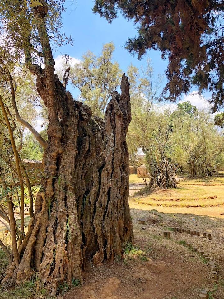 Jardin de Olivos