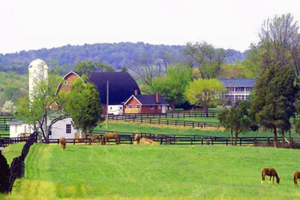 600 Acre Horse & Cattle Farm.