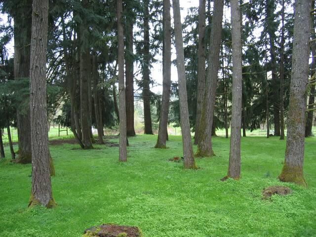 Oregon Eclipse Camping - ElfenWood Camp