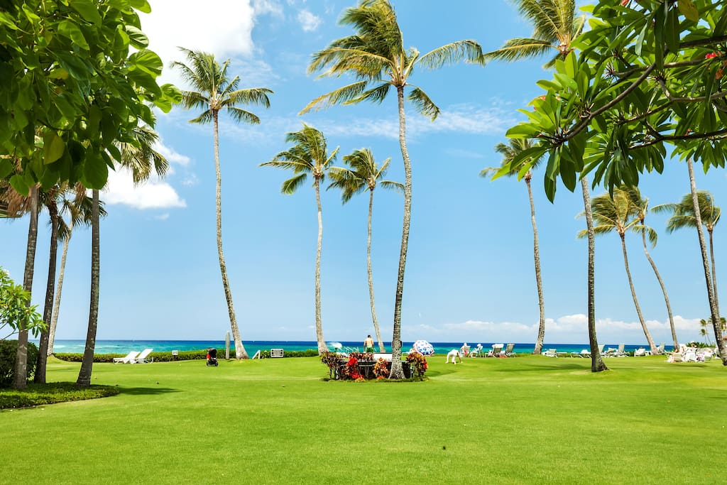 Beachfront Lawn Area