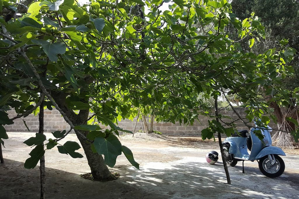 Il Fico verde, l'ombra del giardino
