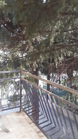 Pine House Apartments - Ohrid - Huis