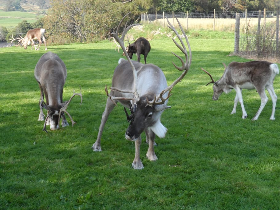 Take a visit to the Reindeer Centre, Aviemore, one of the attractions nearby.