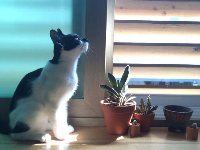 cat ang-kko