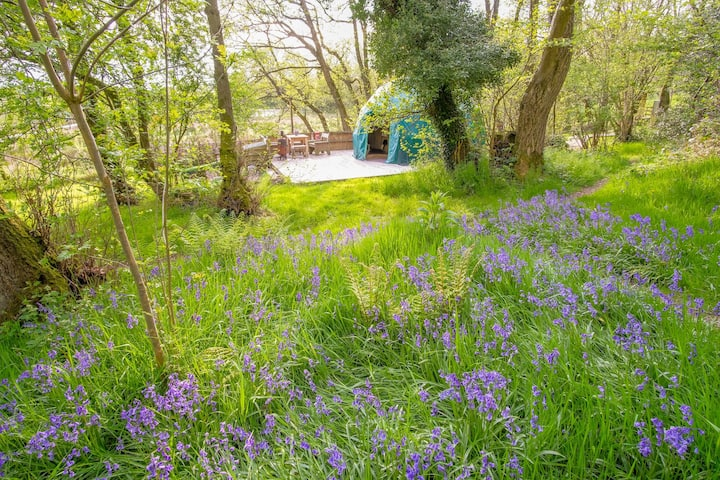 Willow Dome, secret bluebell escape