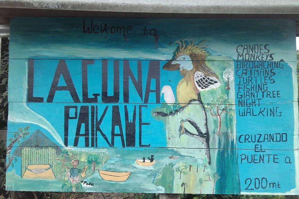 actividades en misahualli wildlife center
