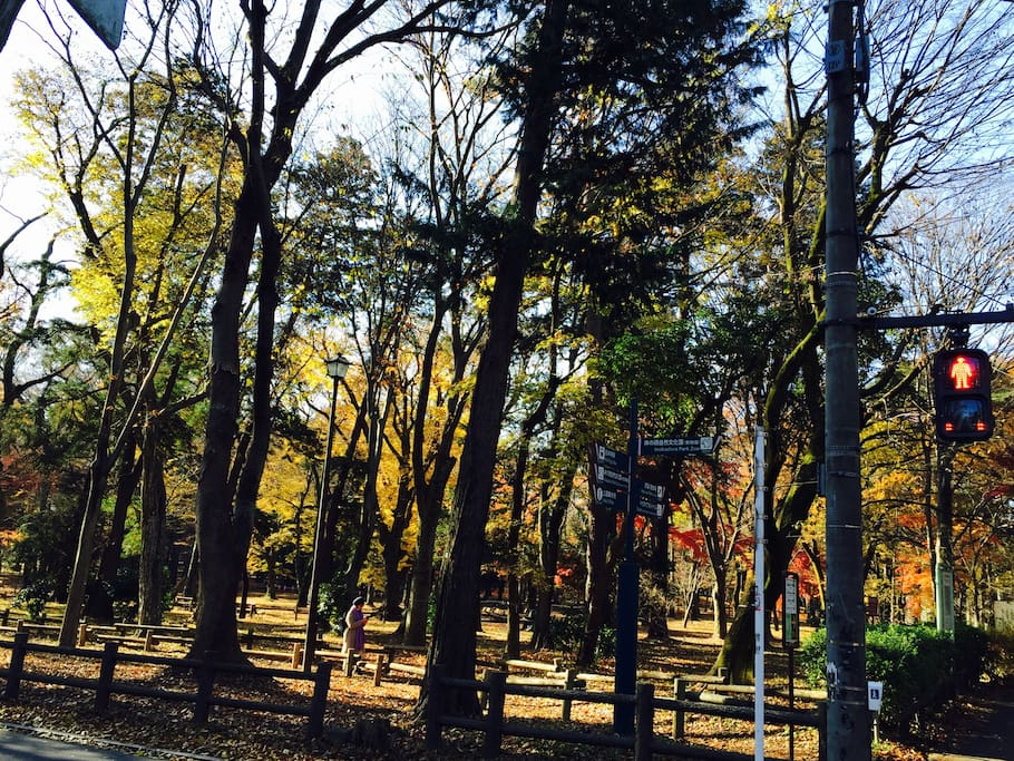 Inokashira park in Autumn.