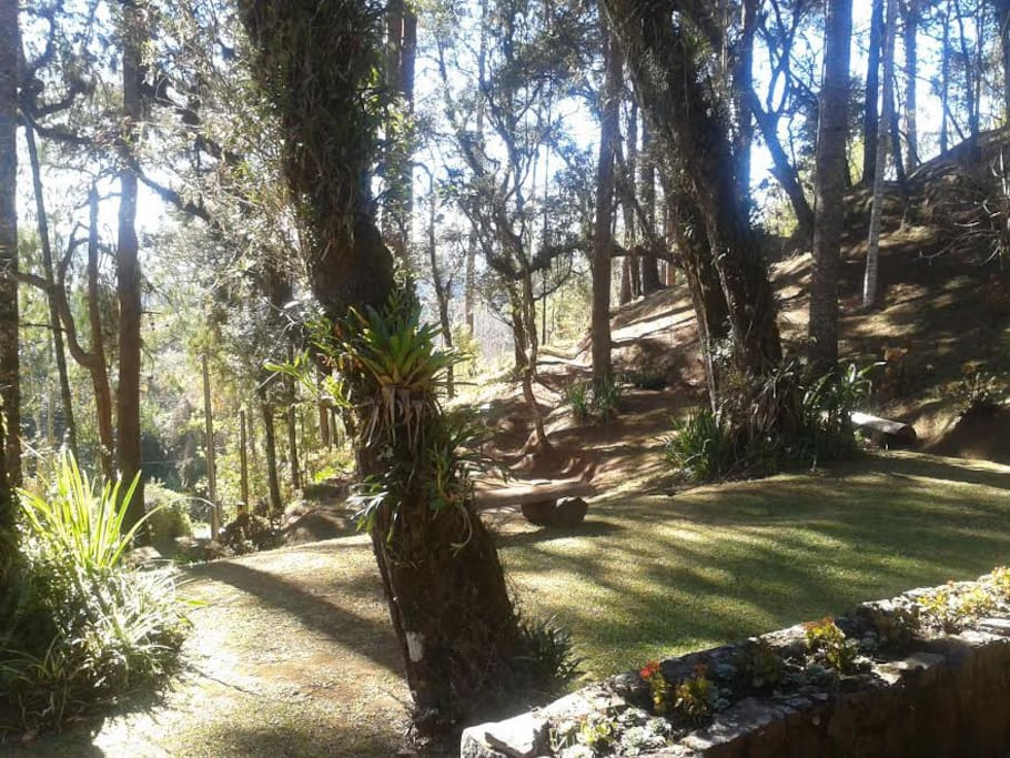 Bosque agradável para passeio.