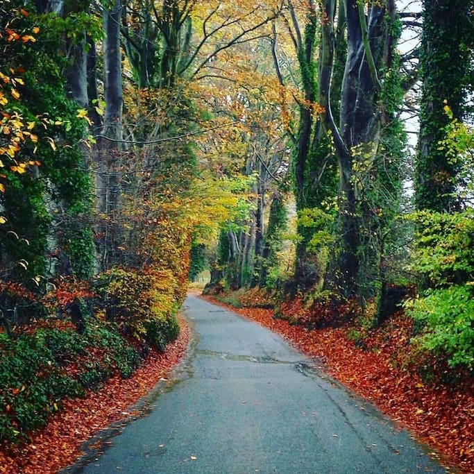 Autumn Colour! It's a great time of year to visit the New Forest!