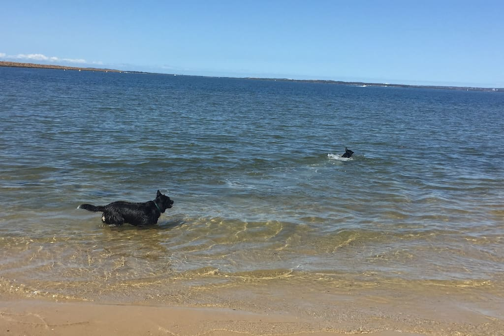 So many beaches within a 10 min drive- this is Charlie & Harry swimming