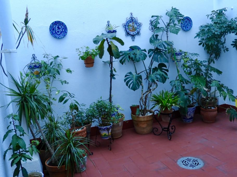 Patio interior/courtyard