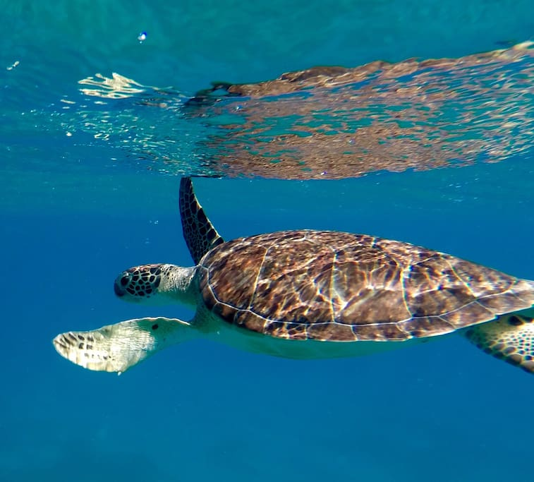 Swim with the turtles.