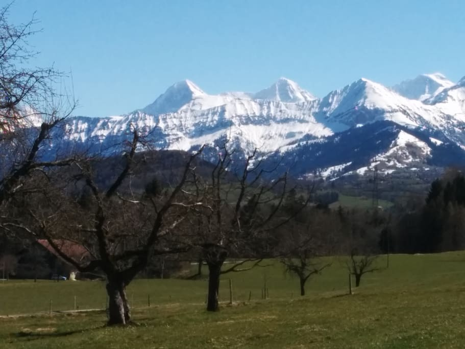 Blick vom Garten auf Eiger,Mönch,Jungfrau