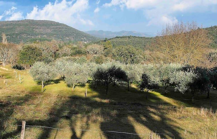 Vue de la terrasse sur l'oliveraie et collines. Olive grove and local Cevenol hills seen from the terrace.