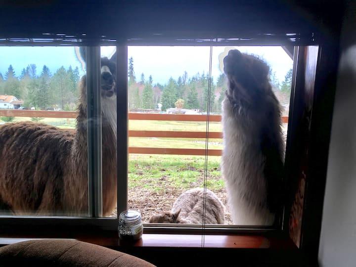 Large Llama Room at Arcadia Farm