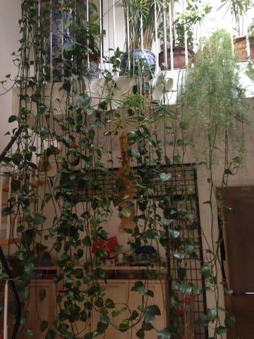 Room with its own bathroom+jungle-like living room - Friedberg (Hessen) - Apartament