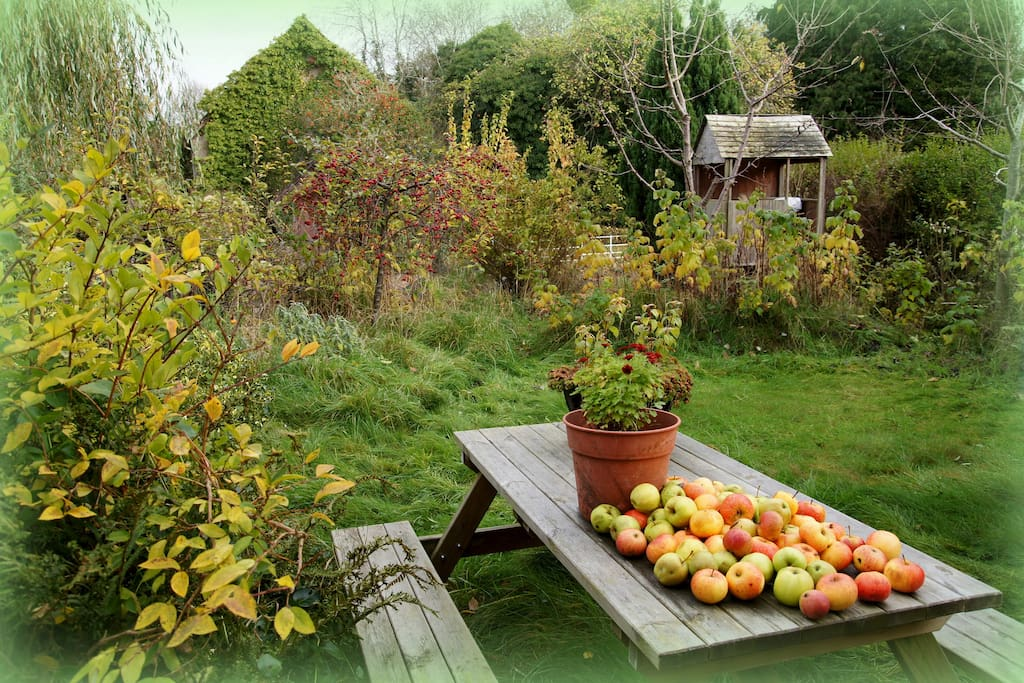 Autumnal garden with apples dropping off the trees