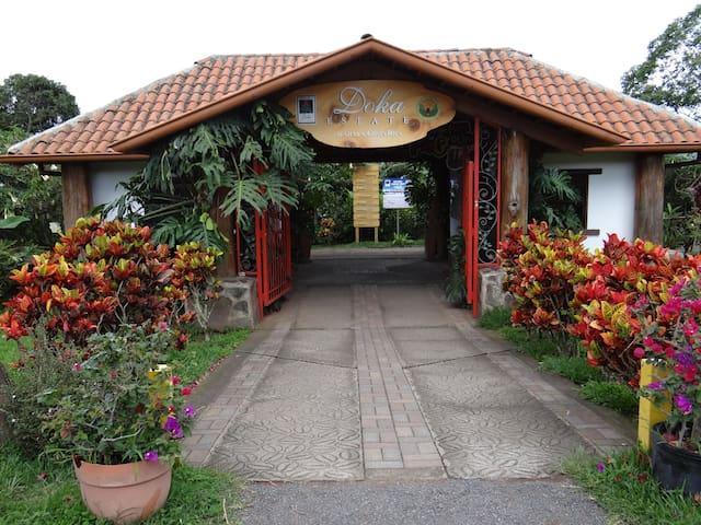 Doka Estate Coffee Tour