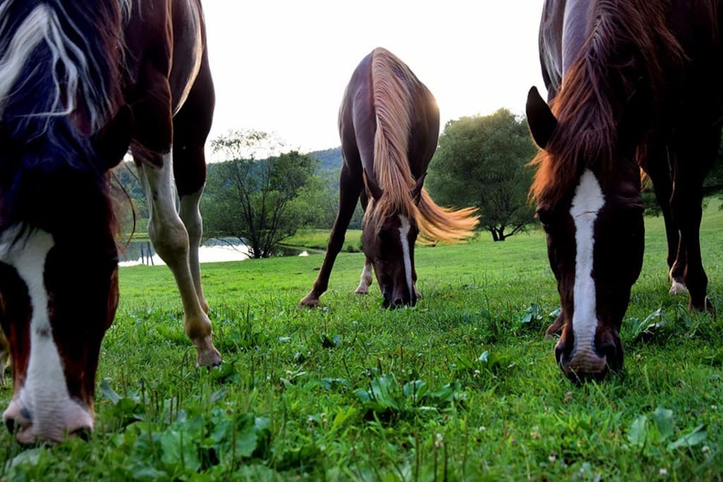 where our horses graze freely