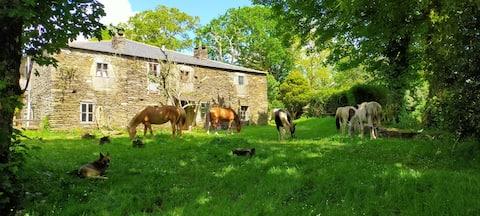 Granja Labrada: Charming farm, nature & horses