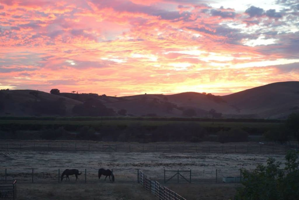 Sunsets and horses!