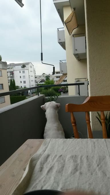 Balcony and Michel our dog