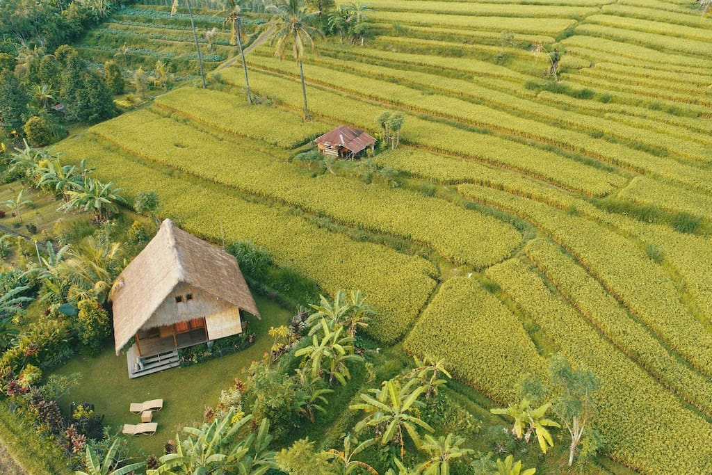 Bird's eye view of WaVi Eco Cottage in rice fields