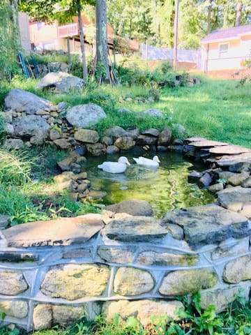 Fish Pond at our backyard