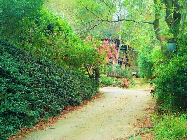 飛鳳林子 Feifong Forest - Touwu Township - 別荘