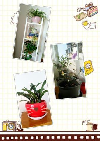 爱的家~Your  home温馨的二居室 - Huangshan - Appartement