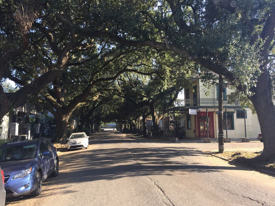 Our beautiful, tree-lined street