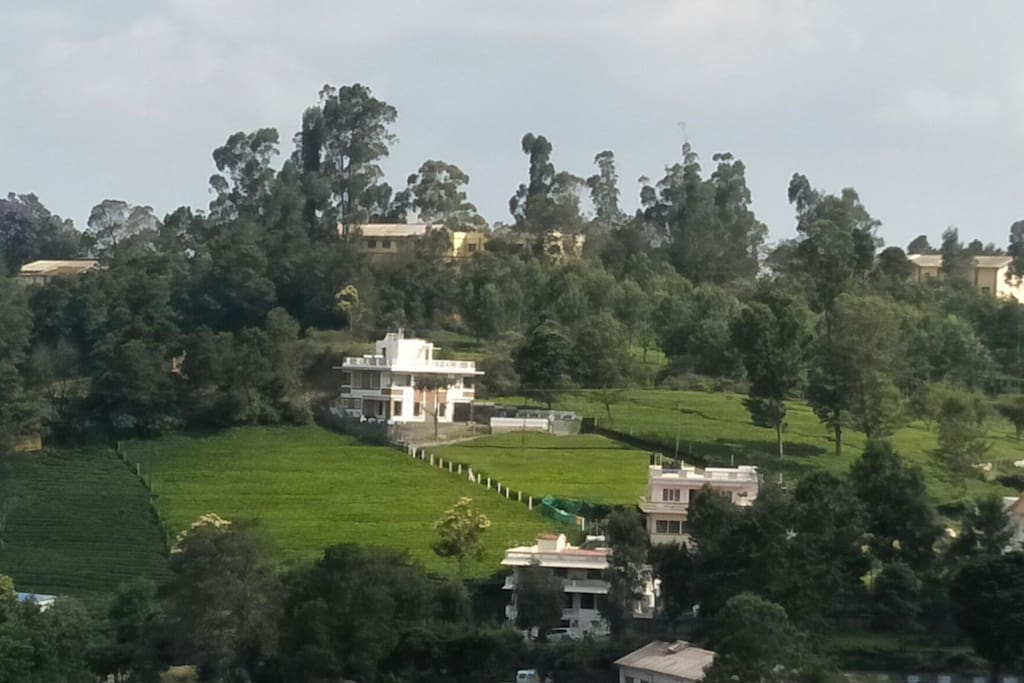Resort surrounded with lush green tea garden