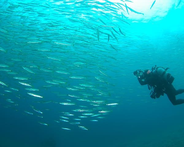 MYMS荘(RoomName:Oo-shima1)海もすぐそばです!