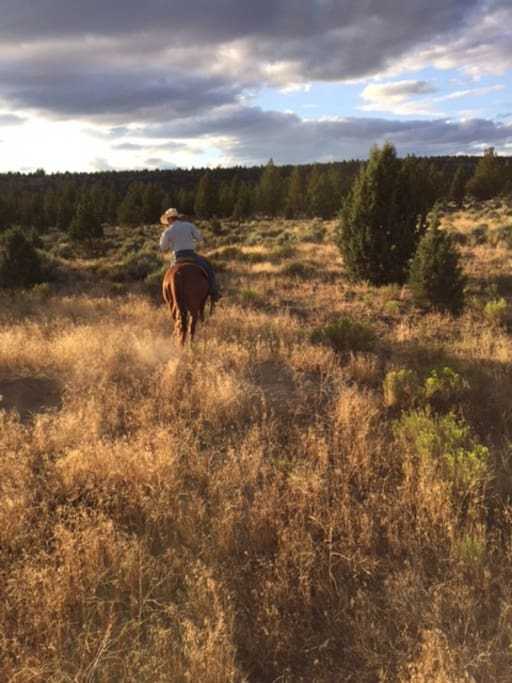Unlimited Horse Back Riding on Property